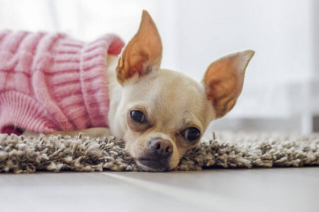 ideas de negocio innovadoras ropa mascotas